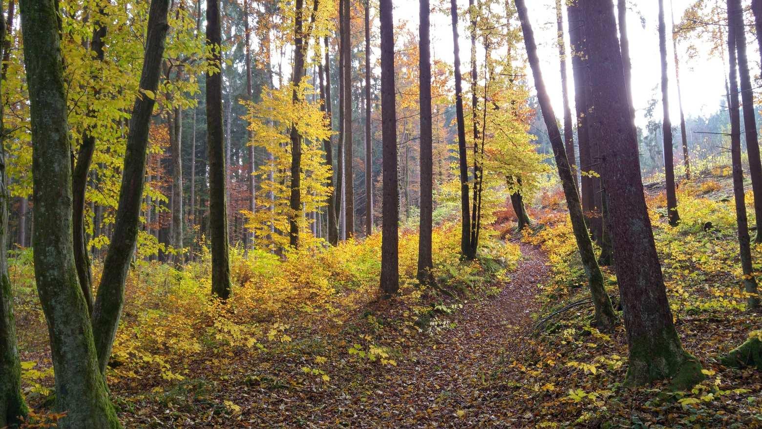 Mountainbike-Touren rund um Bayreuth