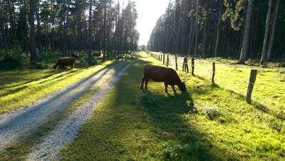Radtouren in Lippe